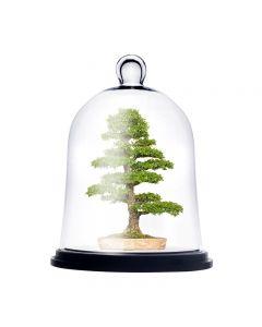 glass cloche dome bell jar