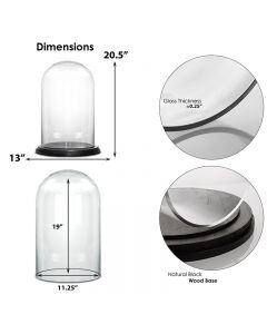 Glass cloches domes display wood base black