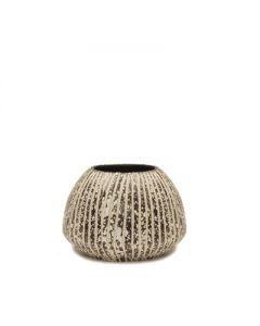 """Conch Vase Mocha H-5"""""""