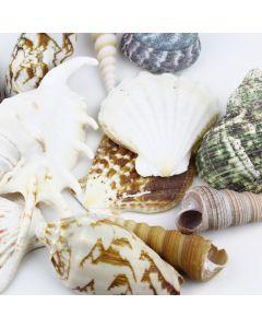 assorted mixed sea-shells