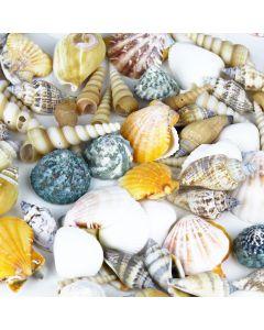 mixed-sea-shells