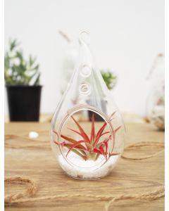 Hanging-glass-plant-terrarium-glass-teardrops-gch104-06