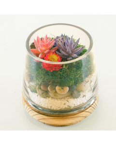 terrarium container with wood base