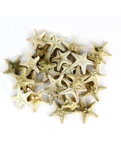 vase-filler-natural-knobby-starfish-VFSF01/02