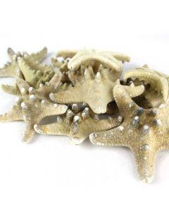 vase-filler-natural-knobby-starfish-VFSF02/04
