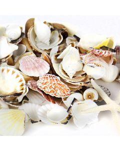 Mixed sea shells