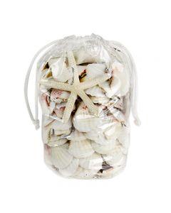 seashell-mix-vfss2002-00