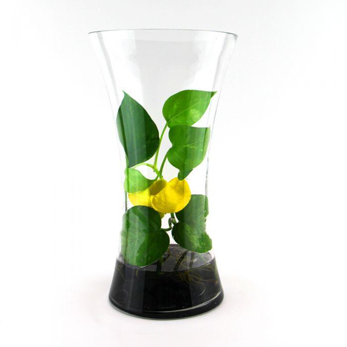 glass-flare-vase-gcu030
