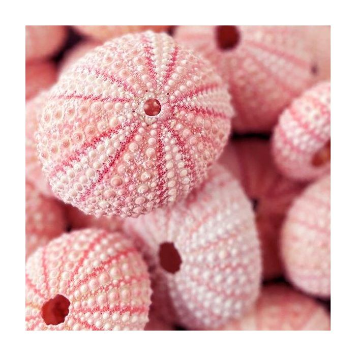 Bright Pink Seashell Accent or Vase