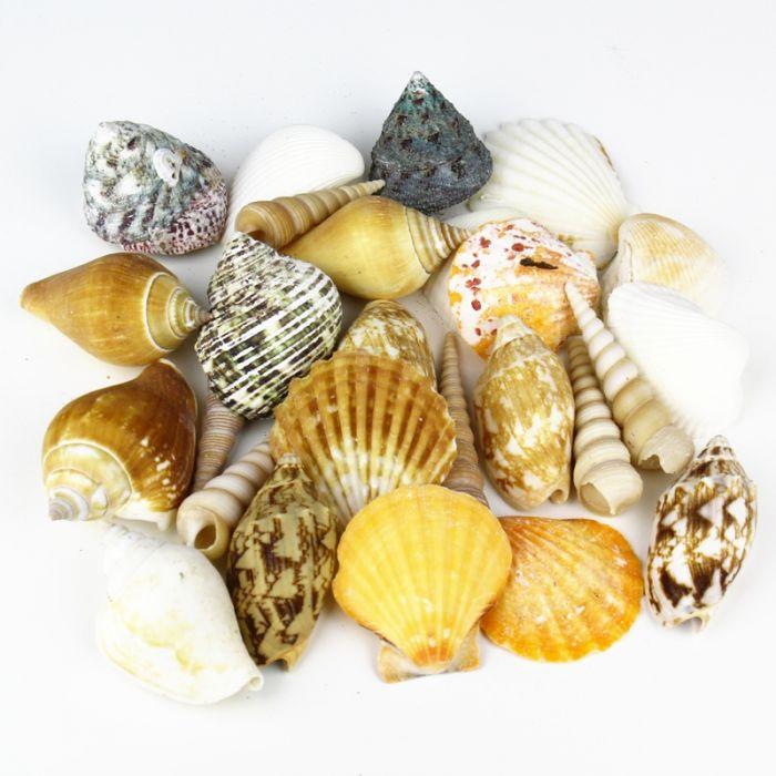 mixed shells