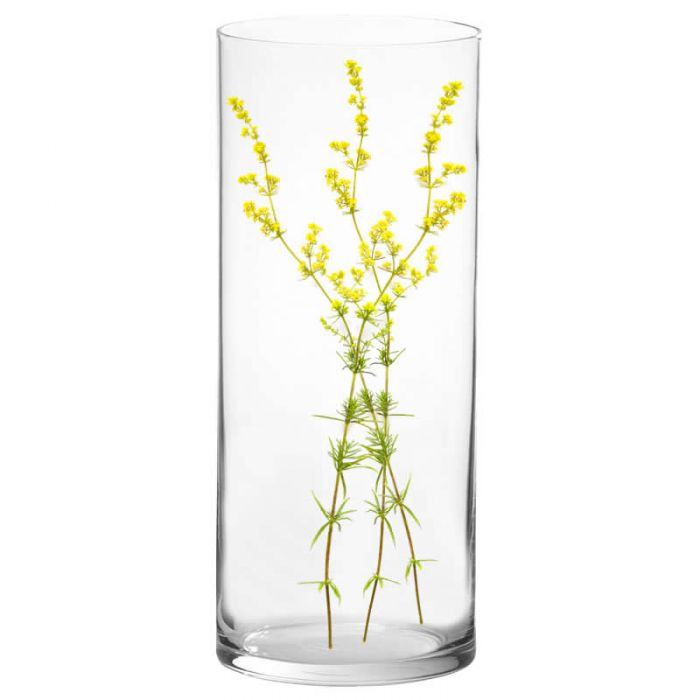 tall-glass-cylinder-vase-gcy153