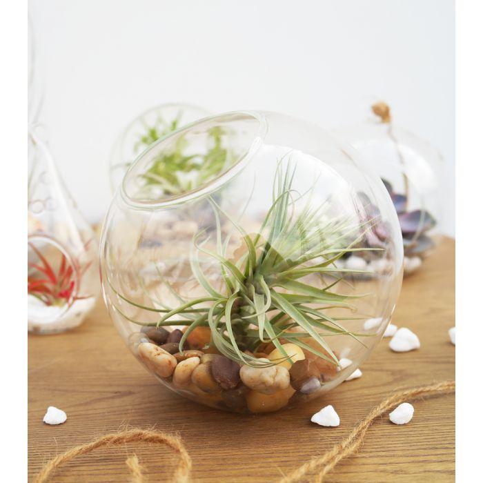 glass-ball-terrarium-planter-gch112/06