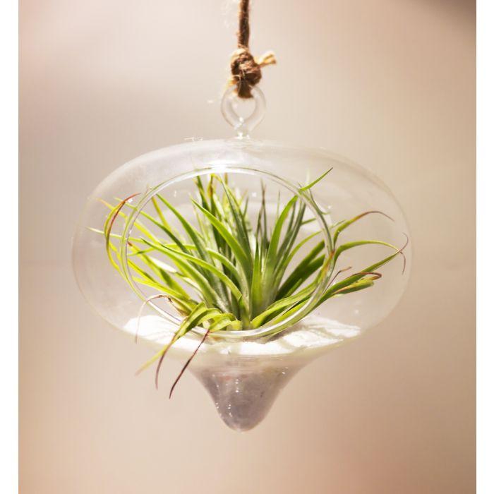 glass-hanging-glass-terrarium-planter-gch118
