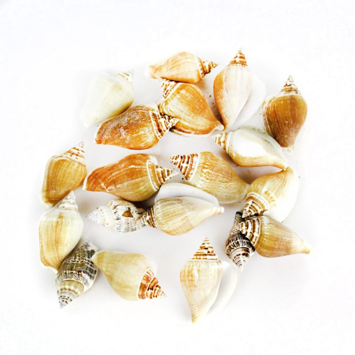 ... or shells that are small and cute!