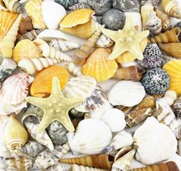 Beach Style Decoration with Mixed Color Seashells and Sea Urchins